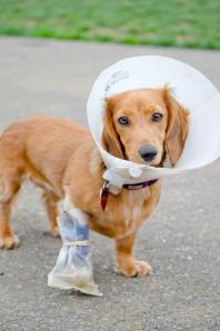 Caring for injured pets