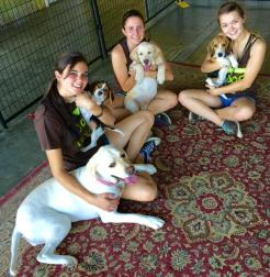 Puppies - September 2015 We love our job and pups! Tilly timmer, Amanda tapia and Joslyn de Simone