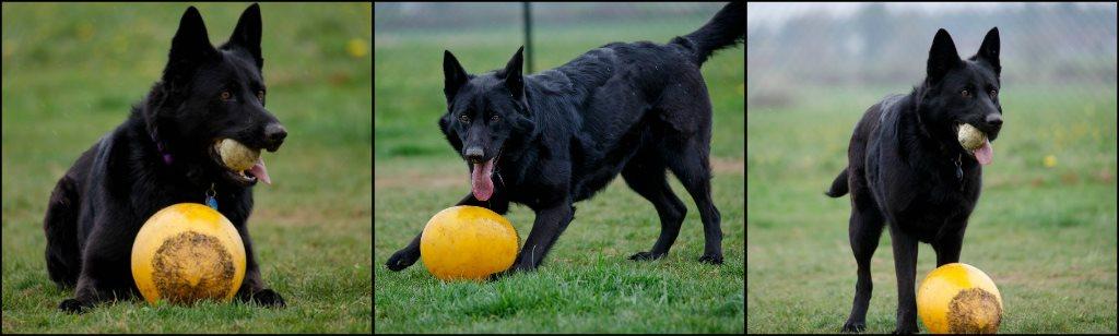 Whatcom County Dog Boarding