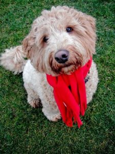 Holiday dog boarding (r)