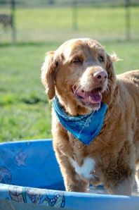 5 tips for boarding your geriatric dog