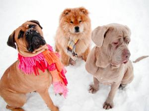 Pet care during the holidays