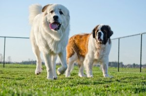 How Doggie Daycare Can Benefit Your Dog